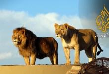 ملوك في الأسر