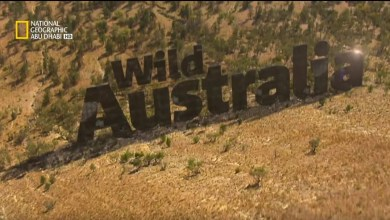 أستراليا البرية - غابة الكوالا
