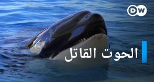 الحوت القاتل