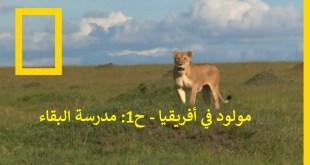 مولود في أفريقيا - الحلقة 1: مدرسة البقاء