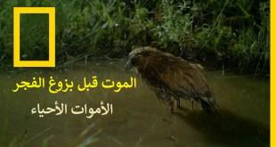الموت قبل بزوغ الفجر : الأموات الأحياء