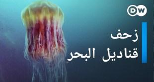 زحف قناديل البحر