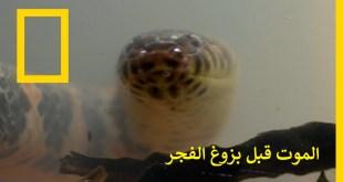الموت قبل بزوغ الفجر : مخلوقات المستنقع