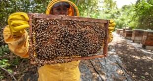 لماذا عسل المانوكا الأغلى في العالم؟