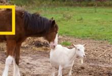 صورة حيوانات صديقة على غير العادة : الأمهات الصغيرات