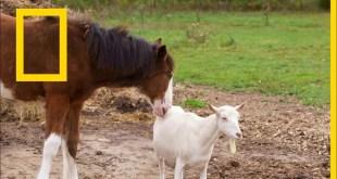 حيوانات صديقة على غير العادة : الأمهات الصغيرات