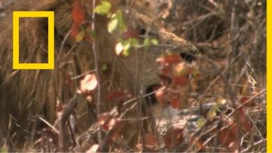 خاص: الحياة البرية - المخيف والضاري