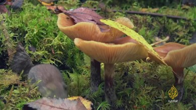 الناجون في الغابات