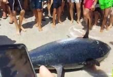 صورة سمكة التونة العنيدة في قبضة الشعب التونسي