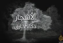 وثائقي عالم الأشجار .. ذكاء خارق