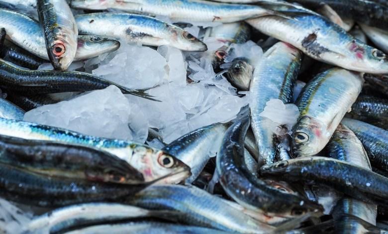 ماذا يحدث لجسمك إذا تناولت سمك السردين أسبوعياً؟
