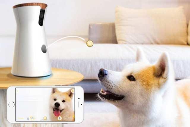 furbo الكاميرات الذكية للحيوانات الاليفة فى المنزل