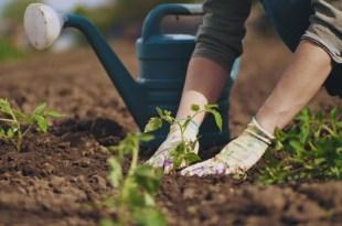 الزراعة فوق سطح المنازل