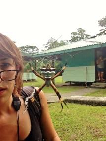 Me and Argiope :) Corcovado, Costa Rica