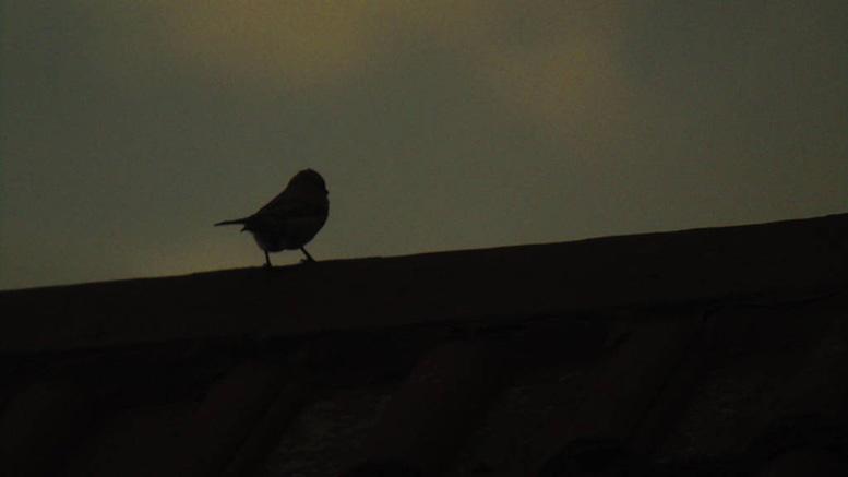 سير الاحلام و ر ؤية الطيور والعصافير