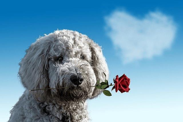 Un perro. Foto: anncapictures