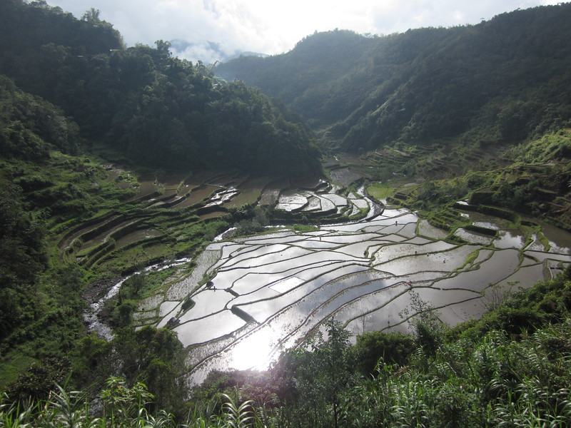 Rice terrace out of Banaue