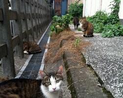 目黒の猫たち
