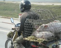 ベトナムバイク事情
