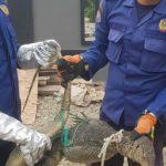 DPKP Kota Banda Aceh Evakuasi Hewan di Gampong Pineung