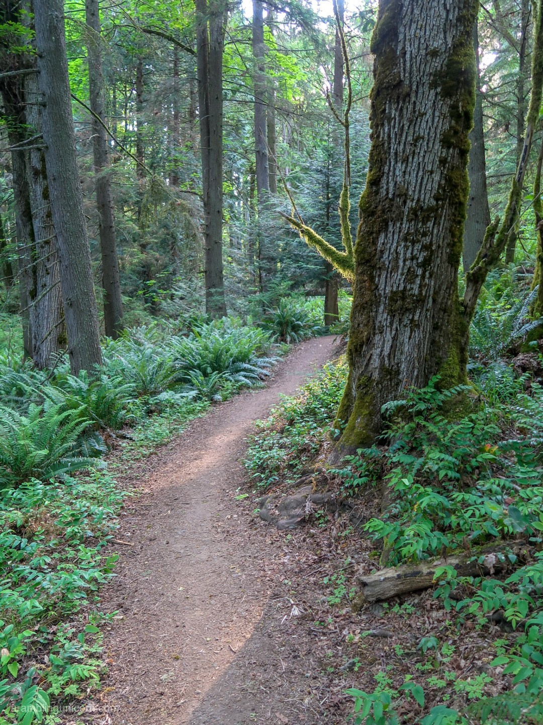 The Margaret's Way trail