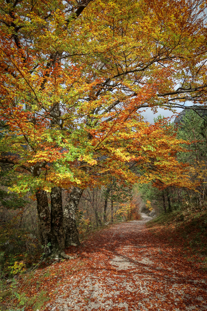 A hiking trail leads through a tree tunnel that is bright with fall foliage of yellows, oranges and reds