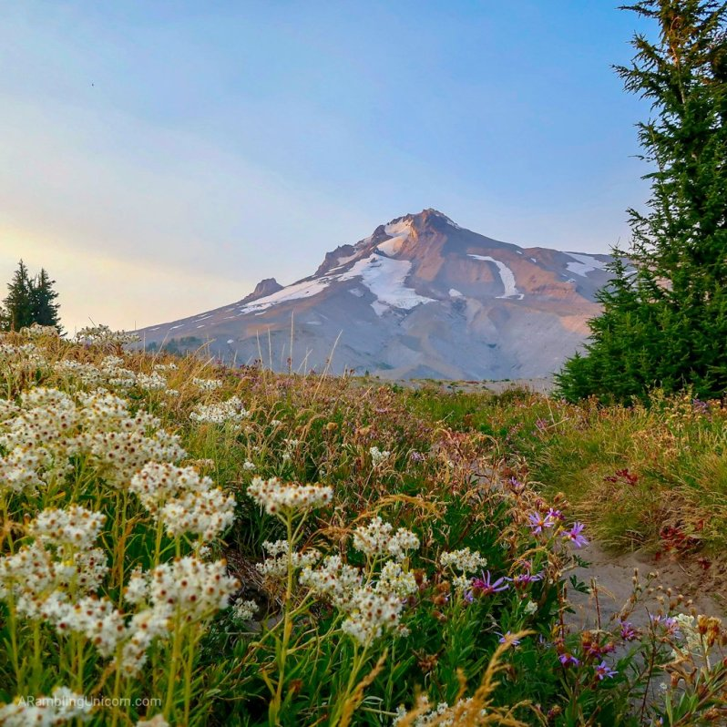 Mt. Hood at sunset in Oregon.