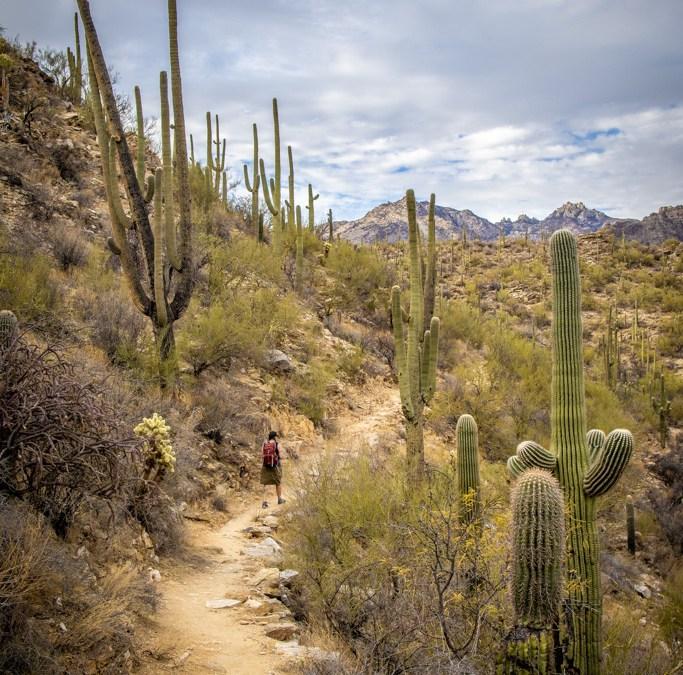 Two Easy Sabino Canyon Trails near Tucson, Arizona