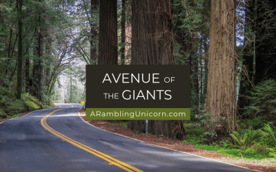 Avenue of the Giants Auto Tour: A Scenic Drive among the Redwoods