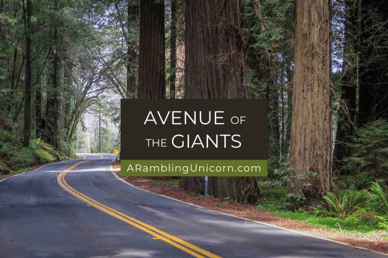 A winding road through redwood trees along the Avenue of the Giants auto tour