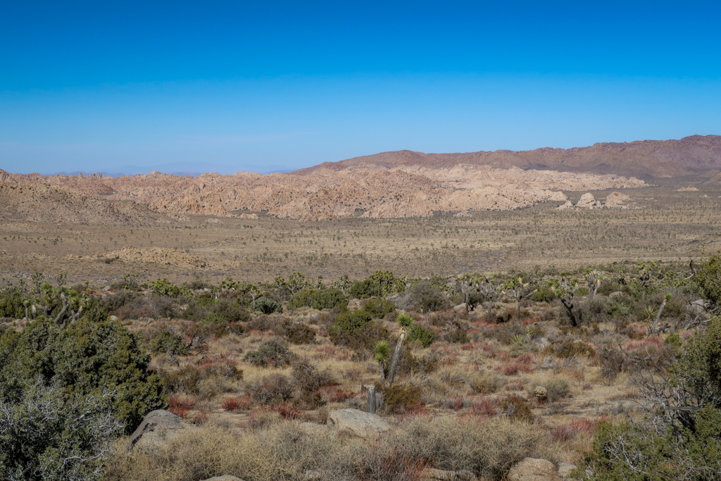 Overlook near Juniper Flats with a few of Joshua Tree National Park dotted with a forest of Joshua Trees