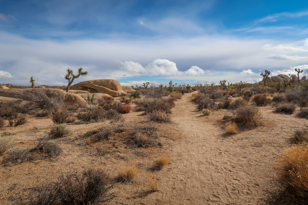 High desert landscape with Joshua Trees, rocks, and puffy clouds, just past the Twin Tanks Trailhead near Belle Campground