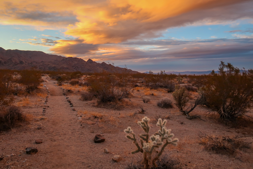 Desert scene with a sunset coloring the sky in yellows and oranges
