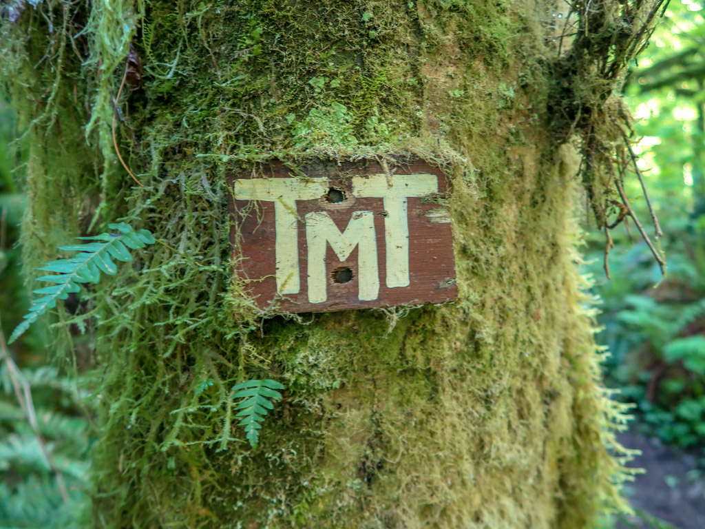 A small handmade sign with TMT painted on it (for Tiger Mountain Trail) is nailed to a mossy tree along the trail