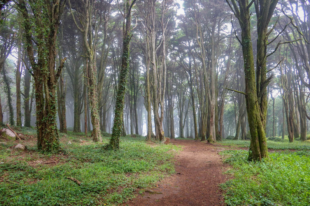 A dirt hiking path leads through a forest shrouded in fog