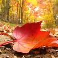 Az Elmúlás Beavatása címmel előadás *meditáció * szertartás lesz a Grál Házban November 1-jén, 19:00-21:30 között Az Élet Megszentelt, s benne a Elmúlás is az. Az élet változások egymásutánja, melyben […]