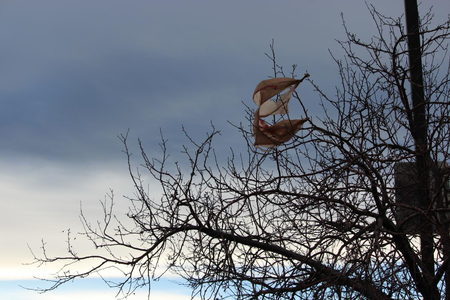 Plastic bags, tangled in a tree, twist in the wind in Highlands Ranch, Colo. on Jan. 28, 2018. House Bill 1054 states that plastic shopping bags