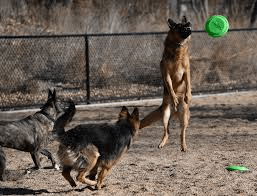 Denver Dog Parks: Off-Leash Fun and Frustration
