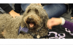 ACC's De-Stress Fest: Therapy Dogs