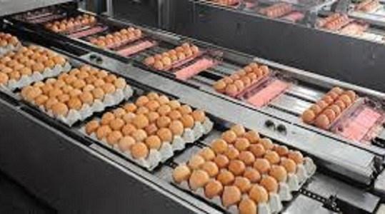 ما سر البيض الذى سيجعلك تأكله كل يوم