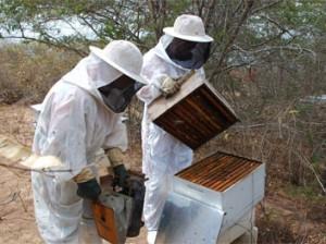 apicultura1