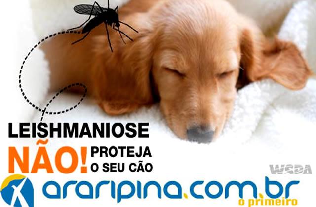 Diagnósticos de 'Calazar' aumentam em Araripina