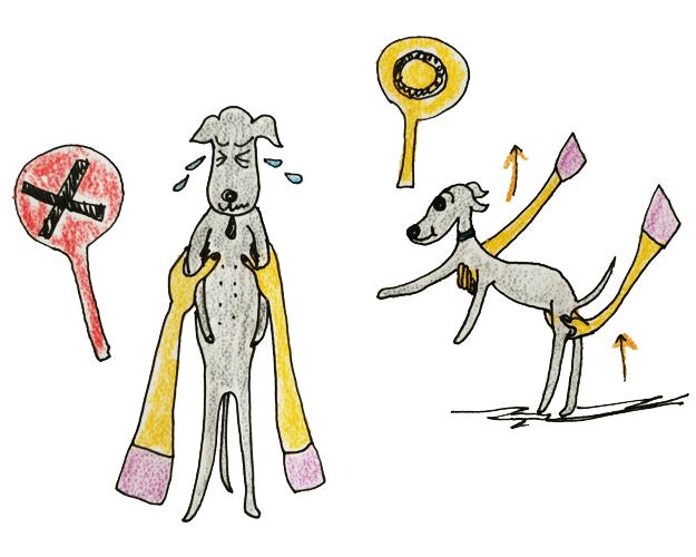 犬には鎖骨がないから抱き方には注意が必要 犬の育て方