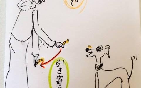 おいでのトレーニング【犬のしつけ・犬の育て方 vol.9】