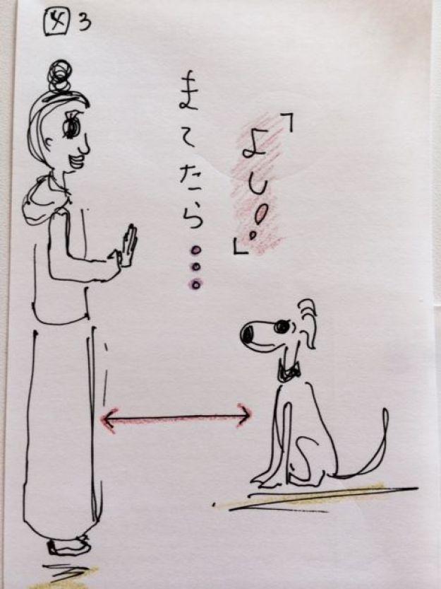 しつけ|待てのトレーニング【犬の育て方 vol.8】