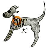 犬には鎖骨がないから抱き方には注意が必要|犬の育て方