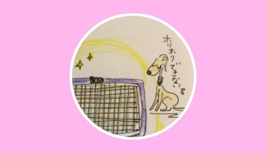 トイレ躾にお勧めのアイテム【犬のしつけ・犬の育て方 vol.18】