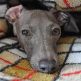 「犬寝袋」いつでもどこでもほっこり寝袋 ARATA HOUSE寝袋