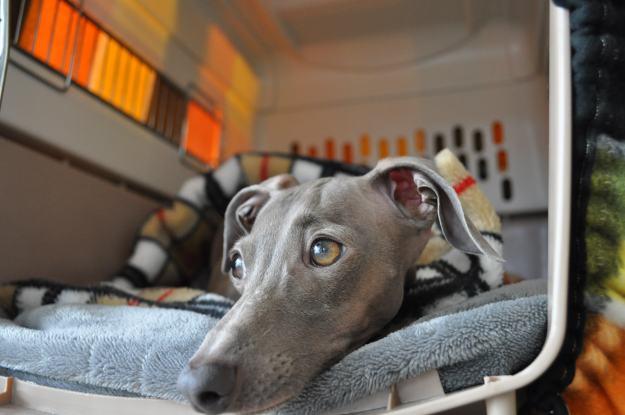 病院での骨折治療も終わり久しぶりに愛犬の体重を量ってみた!