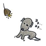 犬の成長その2|2~3週間は移行期【犬の育て方 vol.41】